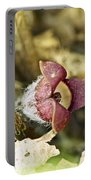 Wild Ginger Wildflower - Asarum Canadense Portable Battery Charger