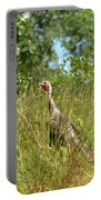 Wild Turkey In The Sun Portable Battery Charger
