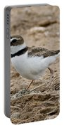 Wilsons Plover At Nest Portable Battery Charger