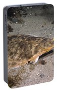 Winter Flounder Portable Battery Charger
