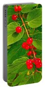 Winterberry Along Rivier Du Nord Trail In The Laurentians-qc Portable Battery Charger