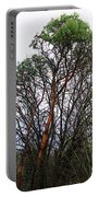 Winters Trees  Portable Battery Charger