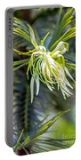 Wollemi Pine Portable Battery Charger