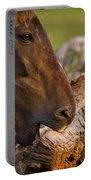 Wood Eater Portable Battery Charger