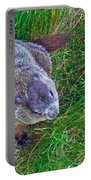Woodchuck In Salmonier Nature Park-nl Portable Battery Charger