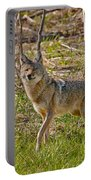 Woodland Coyote Portable Battery Charger