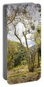 Woodland Glen In The California Vallecito Mountains Portable Battery Charger