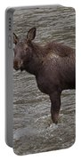 Yearling Moose In The Shoshone River   #1284 Portable Battery Charger