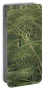 Yellow-barked Acacia Trees Portable Battery Charger