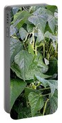 Yellow Beans Portable Battery Charger