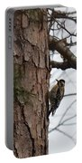 Yellow Bellied Sapsucker In The Pine Portable Battery Charger