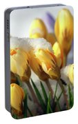 Yellow Crocuses In The Snow Portable Battery Charger
