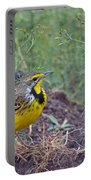 Yellow-throated Longclaw Portable Battery Charger
