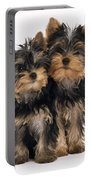 Yorkie Puppies Portable Battery Charger