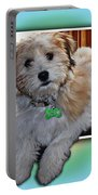 Yoshi Havanese Puppy Portable Battery Charger by Barbara Griffin