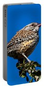 Young Cactus Wren Portable Battery Charger by Robert Bales