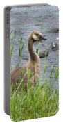 Young Canadian Goose Portable Battery Charger