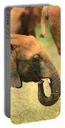 Young Elephant Portable Battery Charger