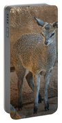 Young Female Klipspringer Portable Battery Charger
