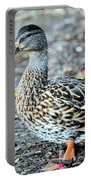 Young Female Mallard Portable Battery Charger