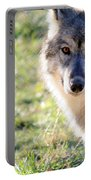 Young Gray Wolf In Light Portable Battery Charger