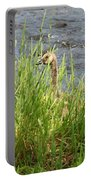 Young Grazing Goose Portable Battery Charger