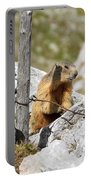 Young Marmot Portable Battery Charger