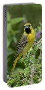Young Orchard Oriole Portable Battery Charger