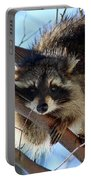 Young Raccoon In Birch Tree Portable Battery Charger