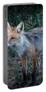 Young Red Fox Portable Battery Charger