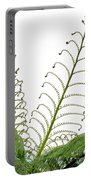 Young Spring Fronds Of Silver Tree Fern On White Portable Battery Charger