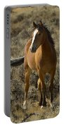 Young Wild Mare   #0307 Portable Battery Charger