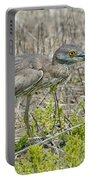 Young Yellow-crowned Night Heron Portable Battery Charger