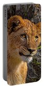 Your Lioness Portable Battery Charger