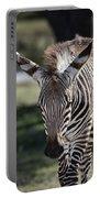 Zebra Crossing V7 Portable Battery Charger
