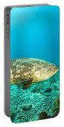 A Goliath Grouper Effortlessly Floats Portable Battery Charger