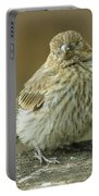 Baby House Finch Portable Battery Charger