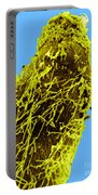 Bacteria On Sorghum Root Tip Portable Battery Charger