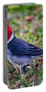 Brazillian Red-capped Cardinal Portable Battery Charger
