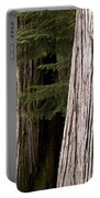 Cedar Trees, Whistler, British Columbia Portable Battery Charger