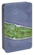 Closterium Sp. Algae Lm Portable Battery Charger