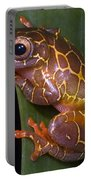 Clown Tree Frog Portable Battery Charger