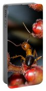 Curious Ant Portable Battery Charger