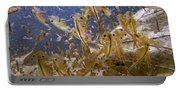 Eastern Fairy Shrimp Easterbrook Forest Portable Battery Charger