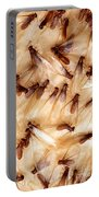 Formosan Termites Portable Battery Charger