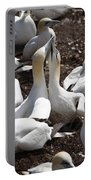 Gannet Birds Showing Fencing Behavior Portable Battery Charger