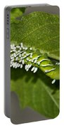 Hornworm With Braconid Wasp Parasites 2 Portable Battery Charger