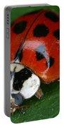 Ladybird Beetle Portable Battery Charger
