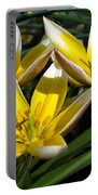 Mini Botanical Tulip Named Dasystemon Tarda Portable Battery Charger