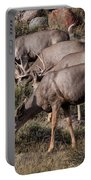 Mule Deer Bucks Portable Battery Charger